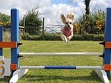 Fun at the Beechgrove Doggy Fun Park