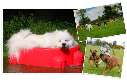 Play time at Beechgrove Doggy Fun Park