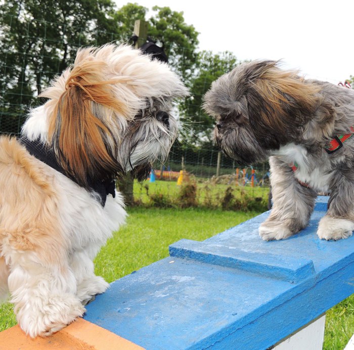 Beechgrove Doggy Fun Park - Private Appointments